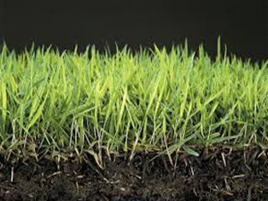 Cesped natural Zoysia japonica vision lateral