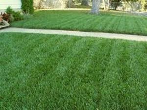 jardín cesped natural Tecniforte