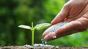 Fertilizante mineral sobre suelo